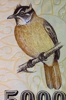 Bulbul żółtolicy portret ze sri lanki pieniędzy
