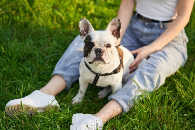 Buldog francuski cieszy się czasem z właścicielem w parku