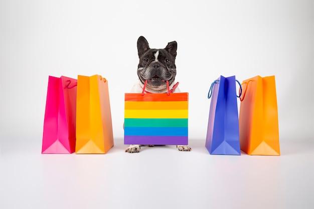 Buldog francuski pies z torby na zakupy