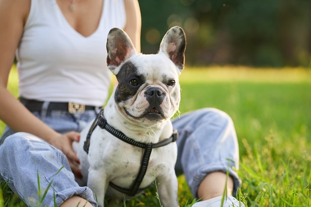 Buldog francuski siedzi na trawie z nierozpoznawalnym właścicielem