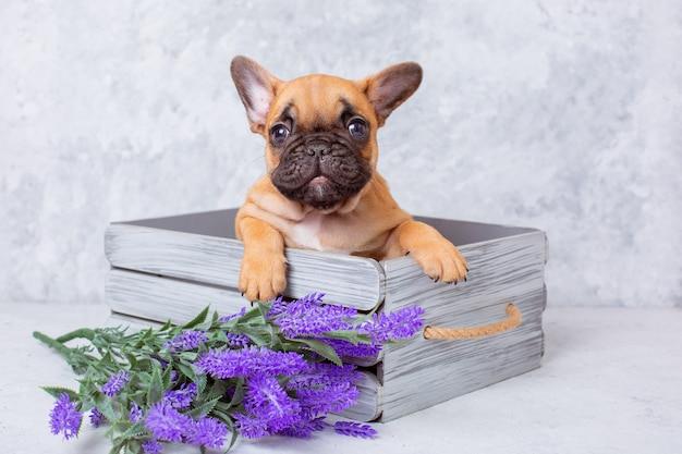 Buldog francuski szczeniak z wiosennych kwiatów