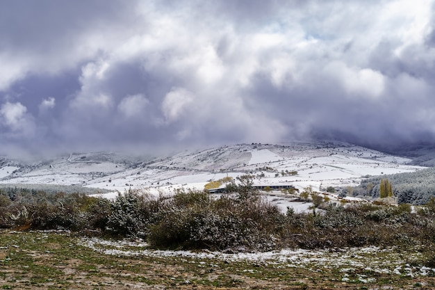 Burza śnieżna niebo krajobraz nad okolicą i ośnieżonymi drzewami. polną drogą do góry. koncepcja śniegu.