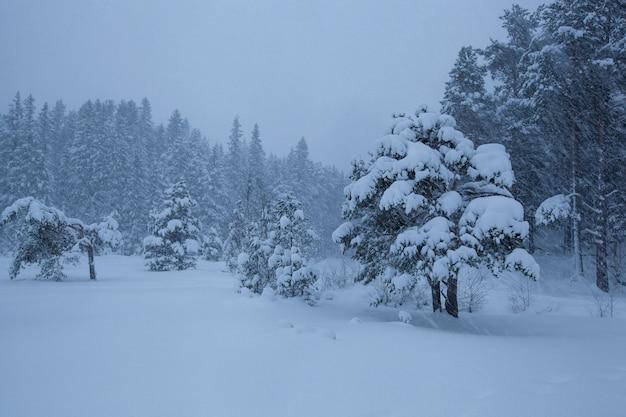 Burzowy zima krajobrazu śniegu drzewo