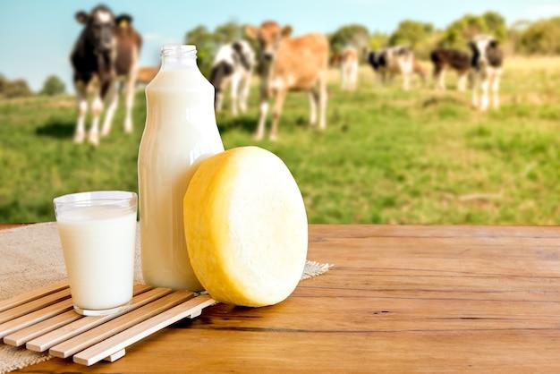 Butelka mleka, szklanka mleka i sera, krowy i pole w tle.