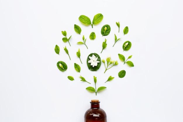 Butelka olejku z kwiatem jaśminu i liści na białym tle.