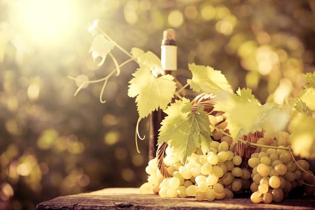 Butelka wina i winogrona z winorośli jesienią