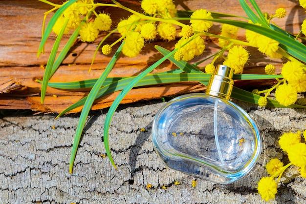 Butelki perfum damskich leżą na korze drzewa z gałązką mimozy w słońcu
