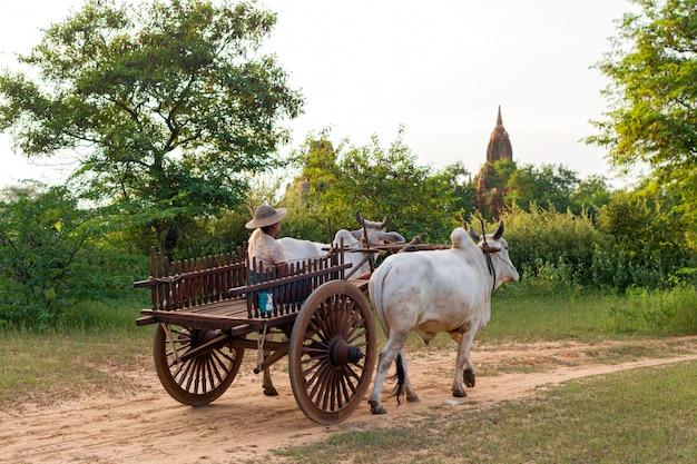 Bydło samochód w bagan, myanmar