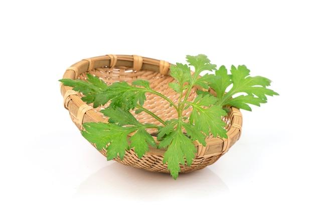 Bylica zwyczajna lub artemisia annua oddział zielone liście na białym tle.