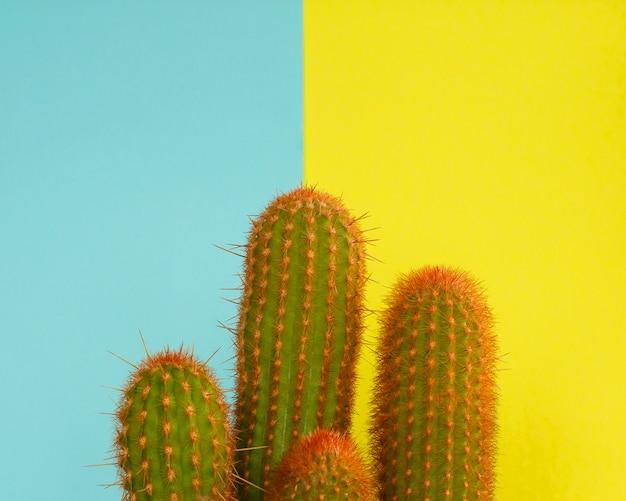 Cactus fashion design. minimalna moda stillife. modne jasne kolory.