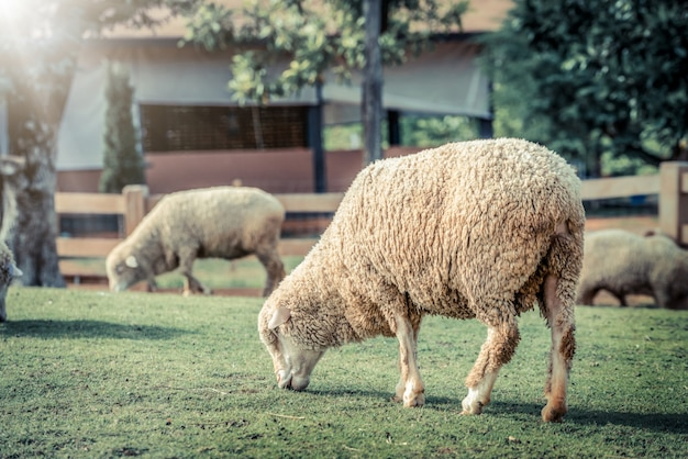 Cakle na zielonej trawy polu w gospodarstwo rolne domu.