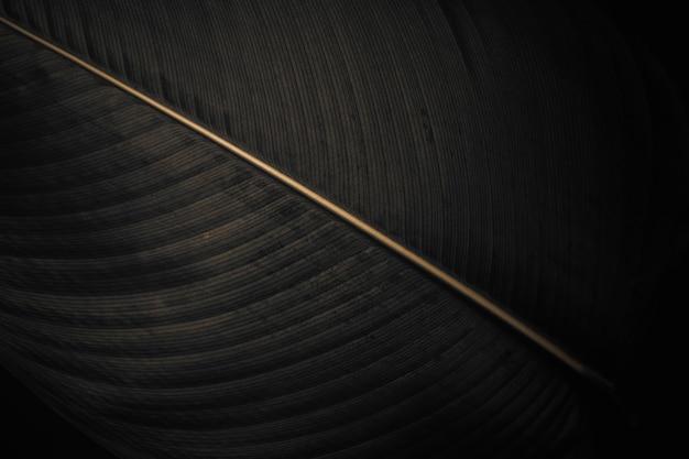 Calathea lutea liść makro strzał tło