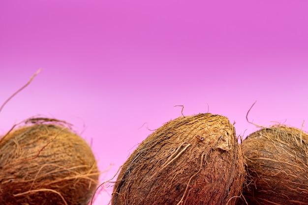Całe orzechy kokosowe na różowym tle. trzy kudłate orzechy kokosowe leżą na odosobnionym tle