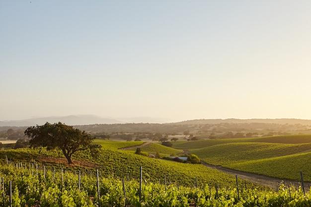 California vineyards w santa barbara