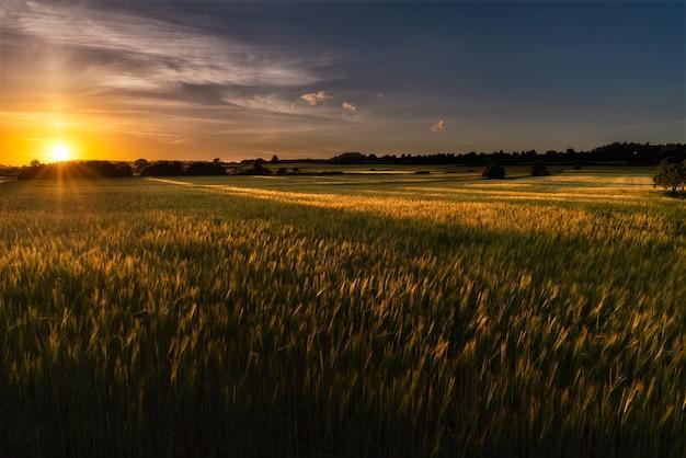 Campos de trigo al atardecer