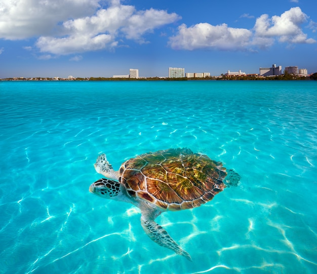 Cancun hotel zone turtle mexico photomount
