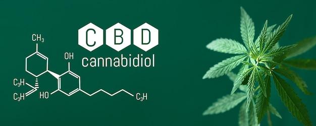 Cannabis cbd, liść kannabidiolu z tytułem i formułą cbd - legalna marihuana - baner zielone tło. format banera z miejscem na miejsce na kopię