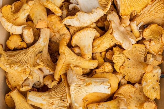 Cantharellus cibarius, zestaw grzybów kurkowych, w drewnianym pudełku pojemniku, na czarnym tle ciemnego kamiennego stołu, widok z góry płasko leżał