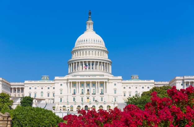 Capitol budynku washington dc różowe kwiaty usa