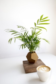Cappuccino z piękną latte sztuką i rośliną z nowoczesną geometryczną doniczką