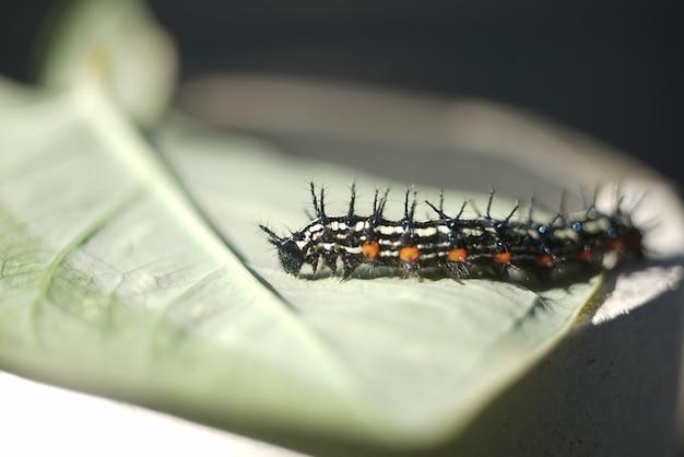 Caterpillar na dzierżawie