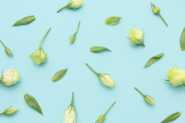 Cebulki mini róż ułożone płasko