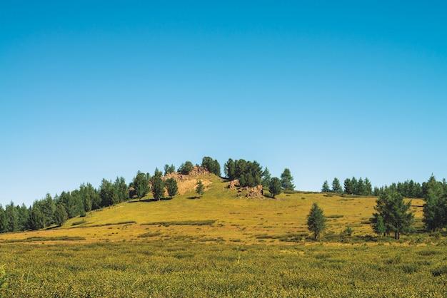 Cedry rosną na wzgórzu w pobliżu skalistego kamienia w słoneczny dzień. niesamowite drzewa iglaste pod błękitne niebo. bogata roślinność wyżynna. niewyobrażalny górski krajobraz.