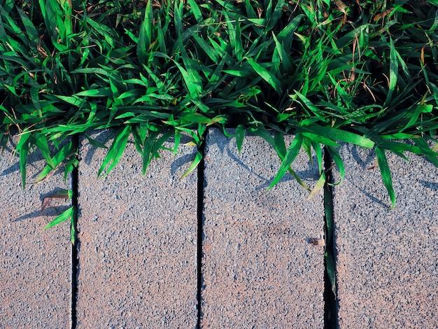 Cementowy cegła blok na podłoga z zieloną trawą w ogródzie dla spaceru