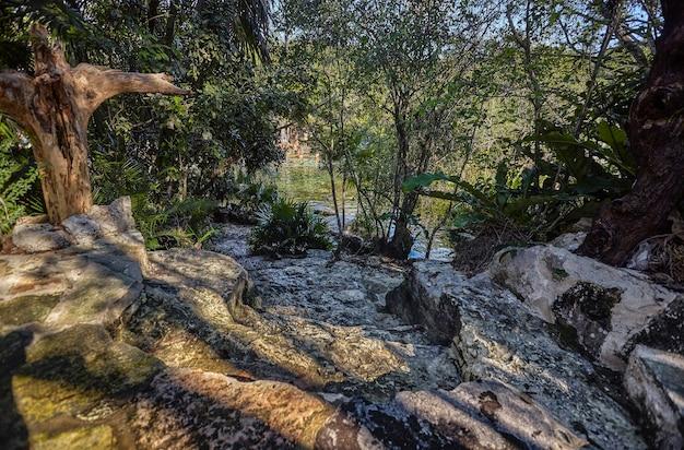 Cenote azul w meksyku #10