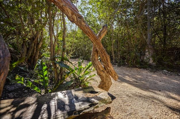 Cenote azul w meksyku #12