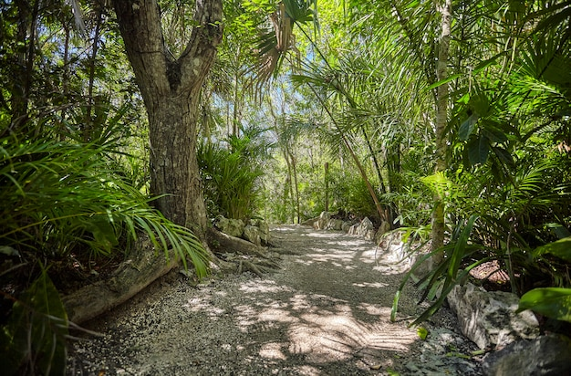 Cenote azul w meksyku #3