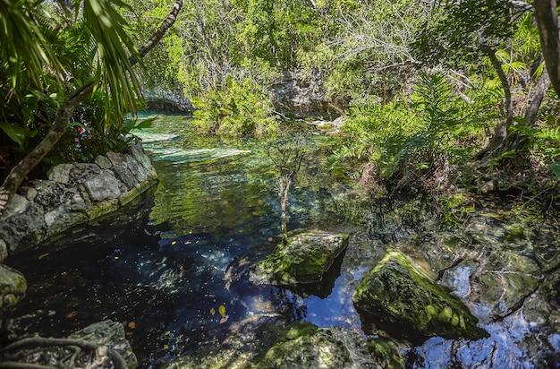 Cenote azul w meksyku #4