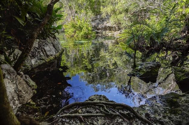 Cenote azul w meksyku #6