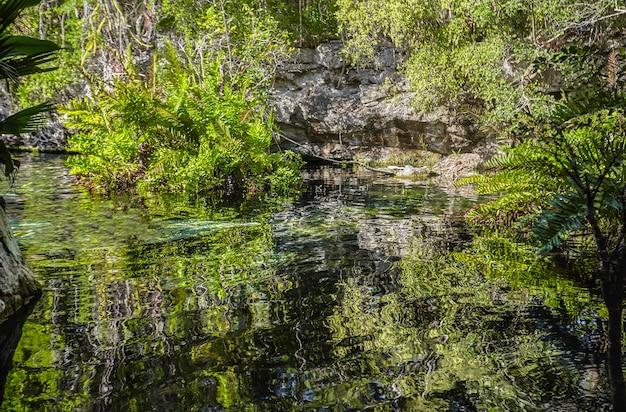 Cenote azul w meksyku #7