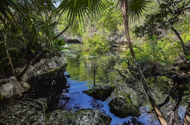 Cenote azul w meksyku #8