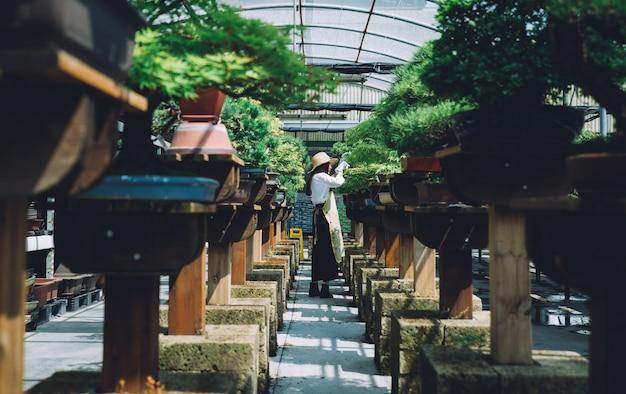 Centrum szklarni bonsai. rzędy małych drzewek, kobieta pracująca i dbająca o rośliny