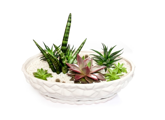 Ceramiczna biała doniczka z różnorodnością