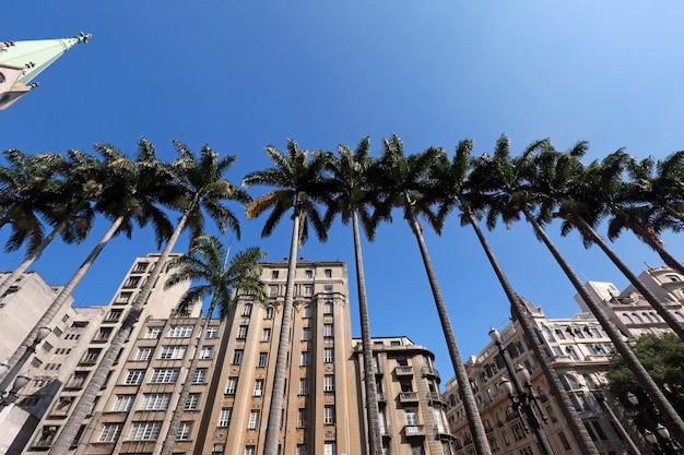 Cesarskie palmy na placu se