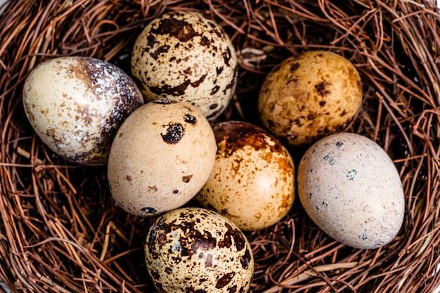 Cętkowane jaja przepiórcze leżące w ptasim gnieździe.