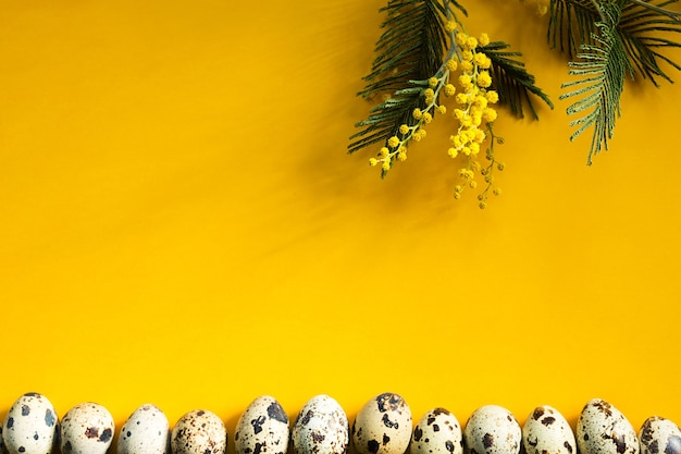 Cętkowane jaja przepiórcze na żółtym tle u dołu ramki i gałąź mimozy z cieniami.