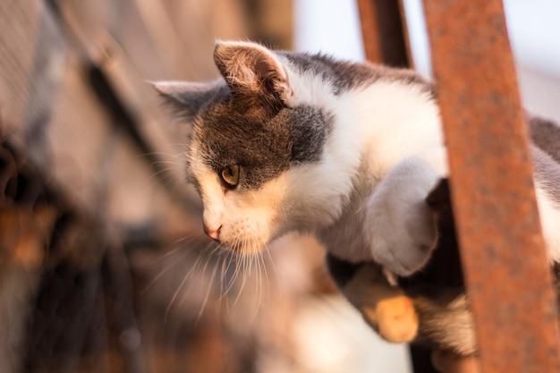 Cętkowany kotek na schodach w ogrodzeniu