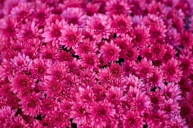 Charakter kwiatowy tło