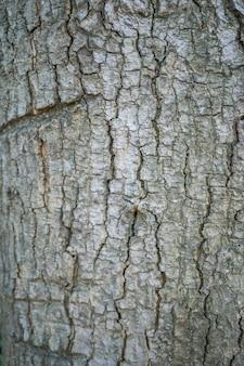Charakterystyka kory drzewa.