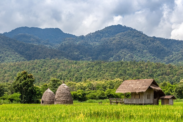 Chata srtawa na polu ryżowym nad jeziorem huai thung tao w chiang mai w tajlandii otoczona pięknymi górami i chmurami natury