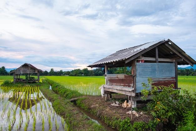 Chata wykonana jest z cynku. kabina w ryżowym polu.