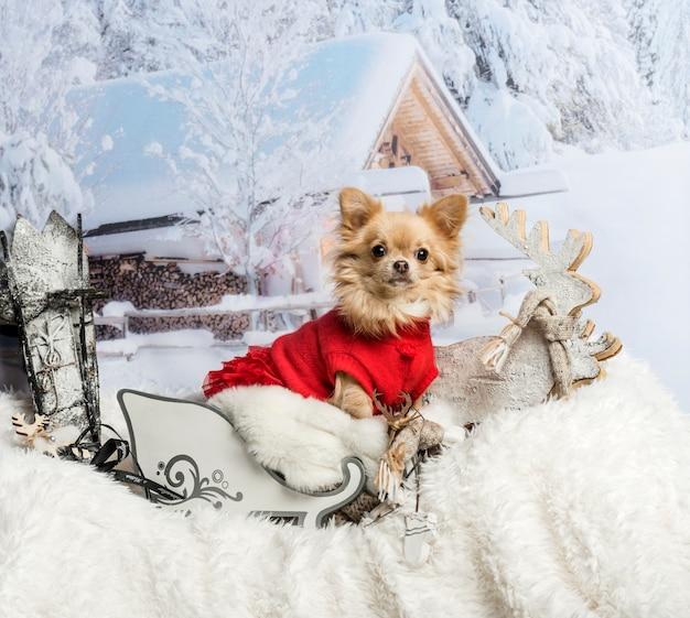 Chihuahua w czerwonej sukience siedzi w saniach przed zimową sceną