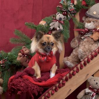 Chihuahua z czerwoną kurtką w świątecznej dekoracji