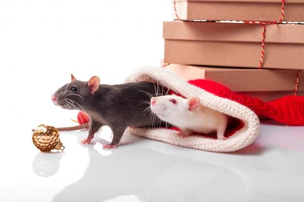 Chiński szczęśliwy rok szczur 2020. czarno-białe szczury jak koncepcja yin yang. dwa szczury z noworocznymi dekoracjami