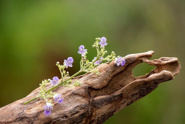 Chińskie kwiaty chaste lub vitex negundo i zielone liście na naturze.