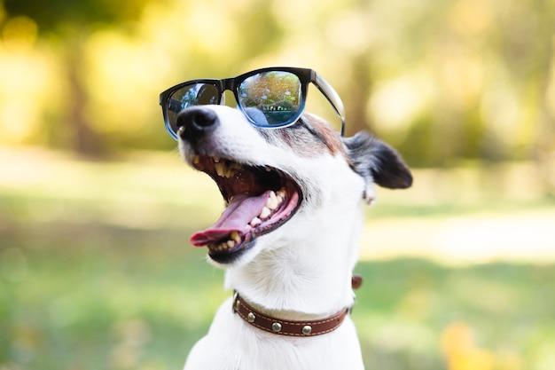 Chłodno pies jest ubranym okulary przeciwsłonecznych w parku